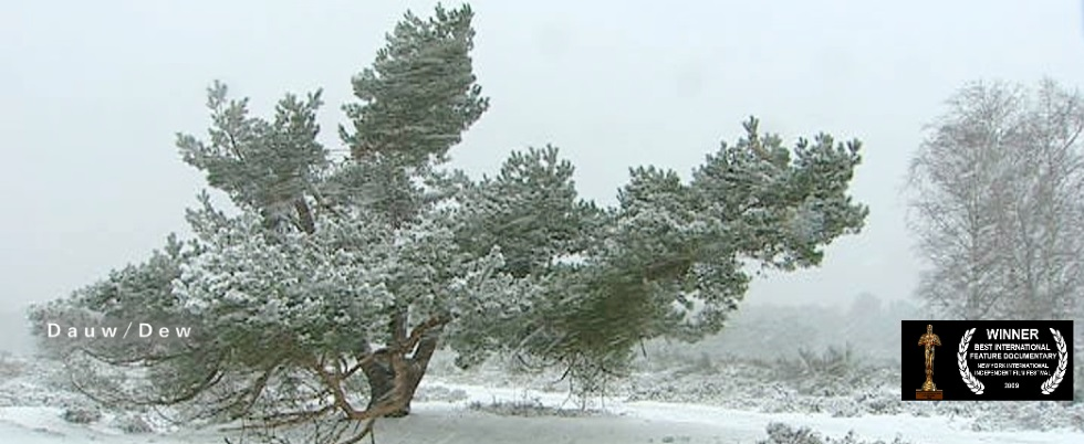A  screenshot of a pine tree in a snow landscape from the awarded documentary Dauw - Dew